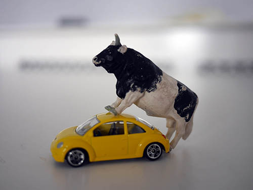 Theory of Art, a bull and a yellow car, photograph by Jay Rechsteiner