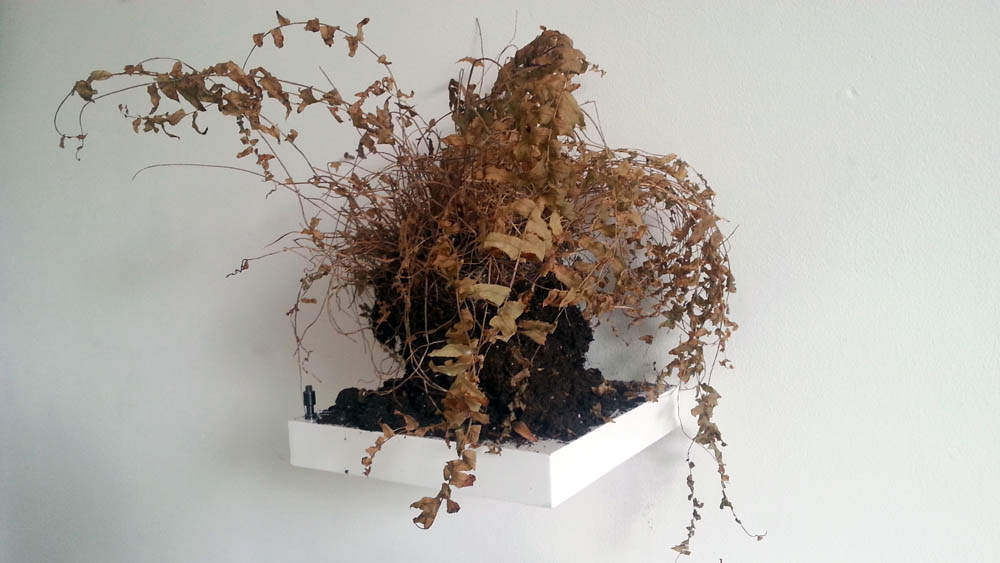 dead plant by Jay Rechsteiner, sculpture, photograph